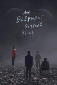 Um Elefante Sentado Quieto